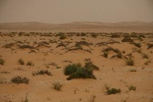 Wesern Sahara desert scape
